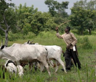 Open Grazing: Leadership Watch Tasks South East Houses Of Assembly On Laws Criminalising Act